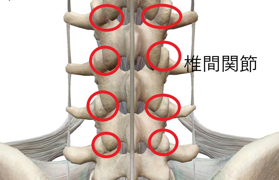 後ろから見た椎間関節