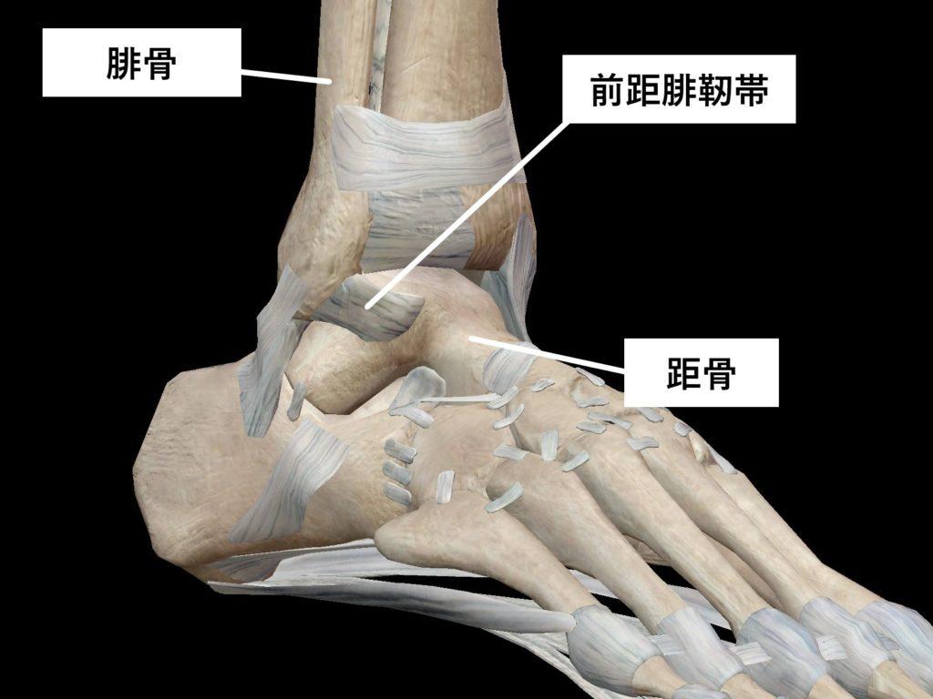 くるぶし 前 距 腓 靭帯