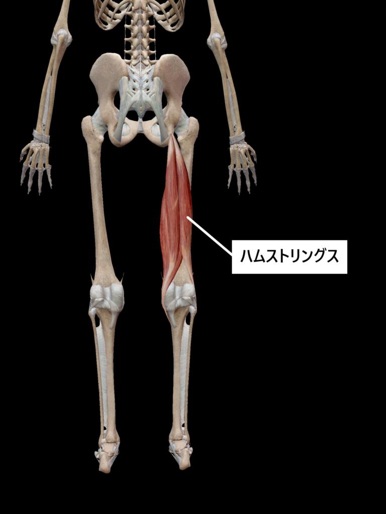ストレッチ筋肉7