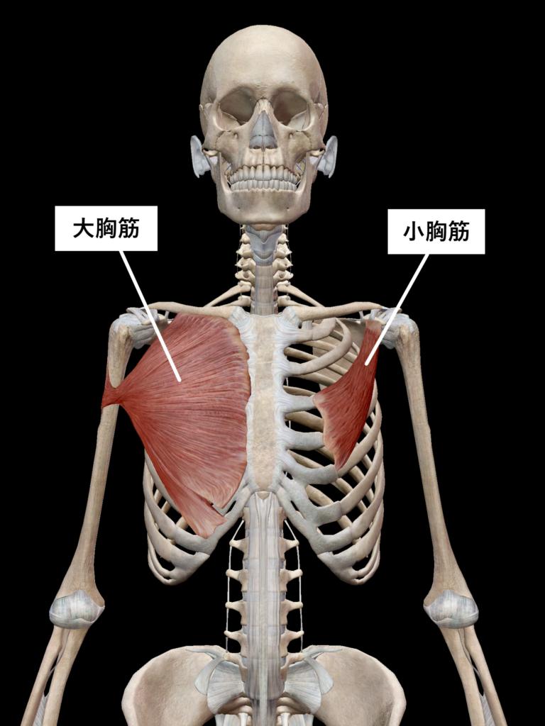 ストレッチ筋肉1