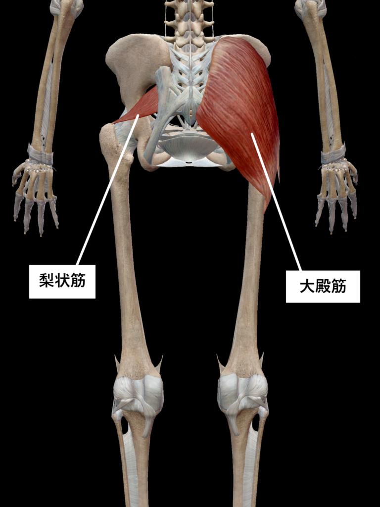 ストレッチ筋肉4