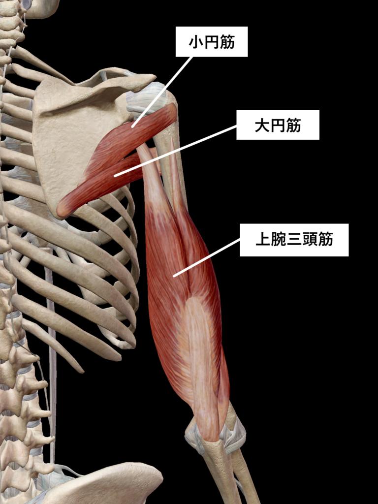 ストレッチ筋肉3
